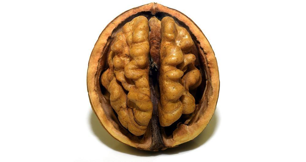 Sobre nueces y cerebros